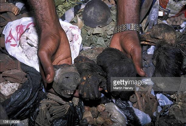bushmeat. ape heads and hands for sale at fetish market. congo. - human face foto e immagini stock