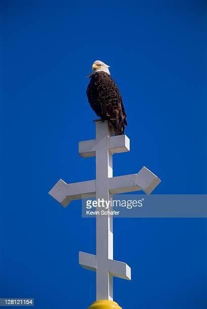 bald eagle on cross of russian church, haliaeetus leucocephalus. unalaska isl., alaska. v - unalaska stock photos and pictures