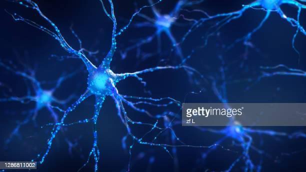 神經 - human nervous system stock pictures, royalty-free photos & images