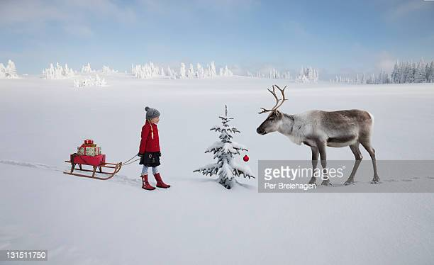 girl with sled meets reindeer by christmas tree - rentier stock-fotos und bilder