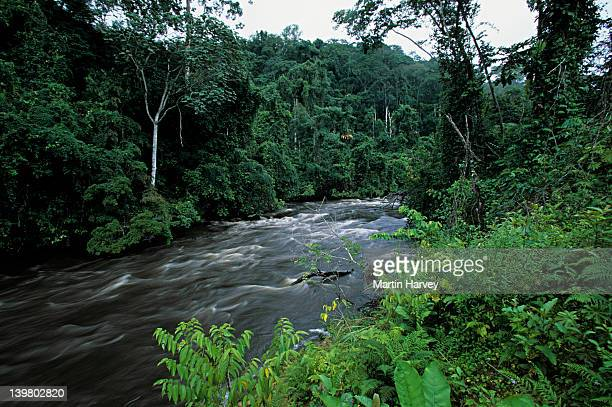 tropical rainforest. western congo basin. moist forest, gabon. africa - gabon stock pictures, royalty-free photos & images