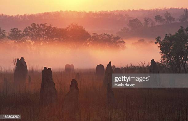 TERMITE MOUNDS AT SUNRISE,  LITCHFIELD PARK, NORTHERN TERRITORY, AUSTRALIA
