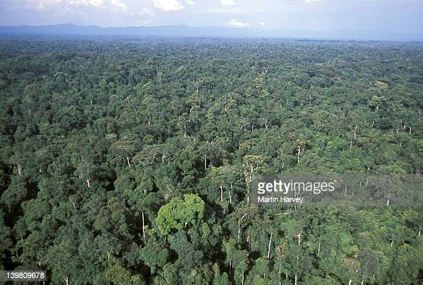 tropical rainforest. western congo basin. moist forest, gabon - gabon stock pictures, royalty-free photos & images