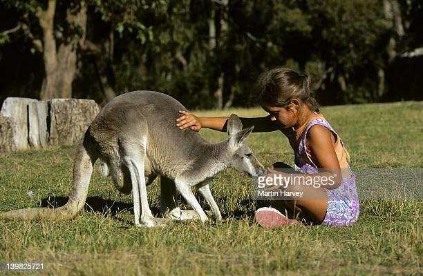 GIRL WITH WESTERN GREY KANGAROO. KANGAROO ISLAND, AUSTRALIA.