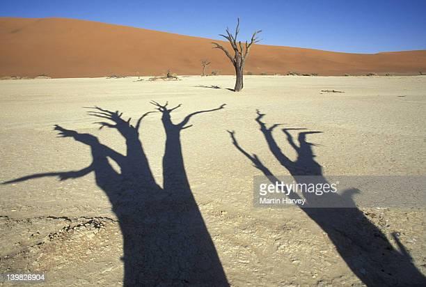 SHADOW OF DEAD TREES. SOSSUSVLEI. NAMIB NAUKLUFT PARK. NAMIBIA. H
