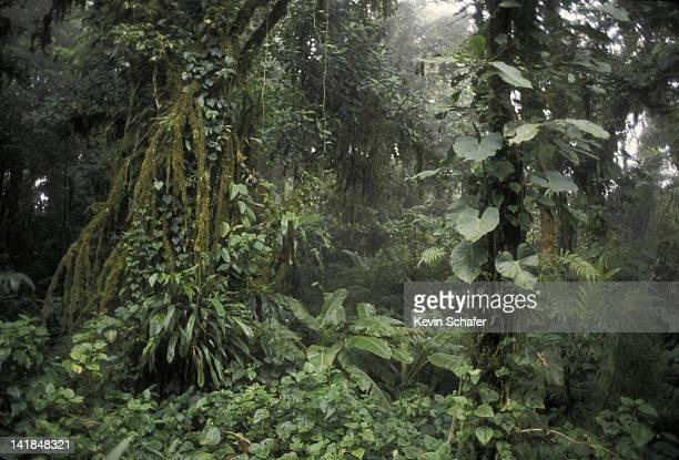 MONTEVERDE CLOUD FOREST. COSTA RICA. H