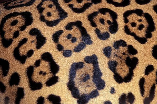Australiana animal prints