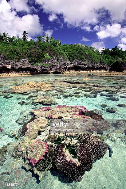 niue island. south pacific. limu pools. coral heads and fish. largest raised coral atoll on earth - niue island stock photos and pictures