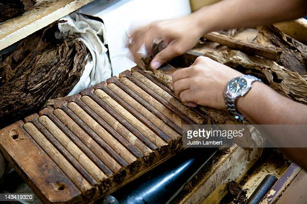 MAN PUTS TOBACCO LEAVES IN A PRESS TO MAKE CIGARS