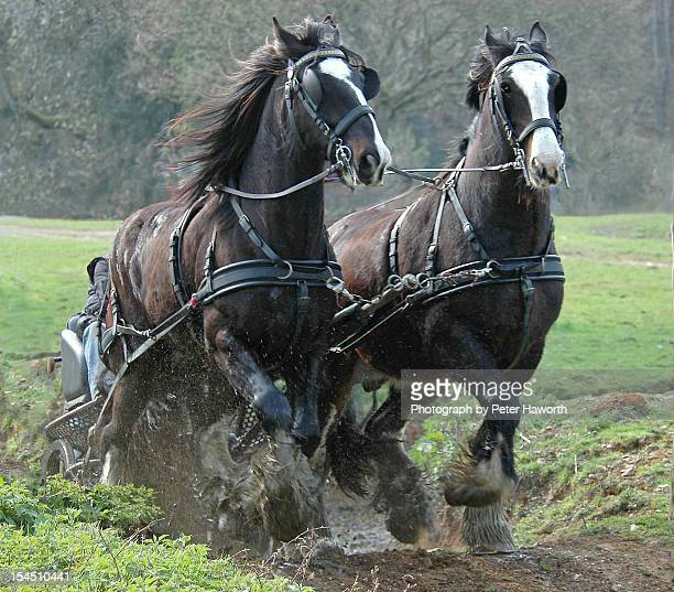 horse power. - shire horse stock pictures, royalty-free photos & images