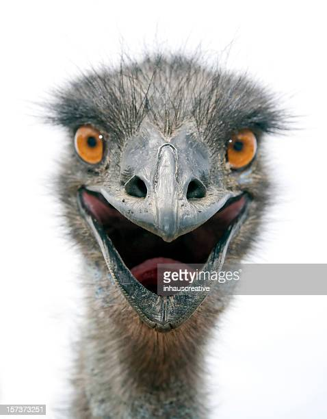 emu (l) - emu stock pictures, royalty-free photos & images