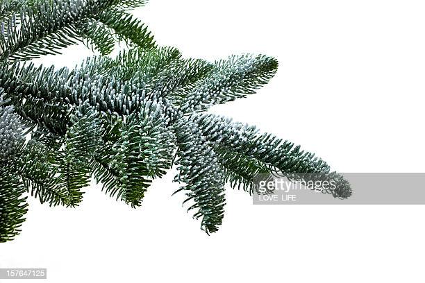 CHRISTMAS TREE BRANCH