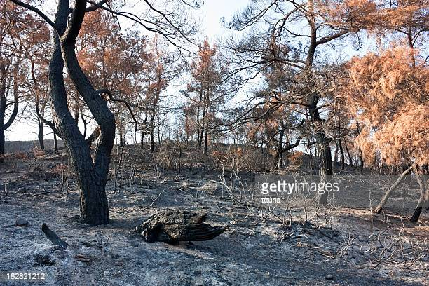 forest fire ashes, outdoor photo beauty in nature - slash and burn stock pictures, royalty-free photos & images