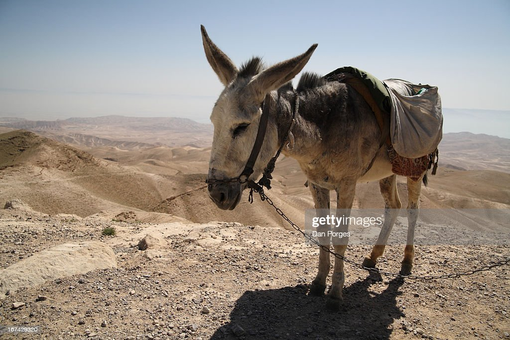 BIBLICAL SITE AND A DONKEY : Foto de stock