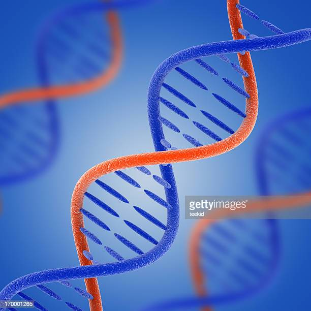 dna - organic compound stock photos and pictures