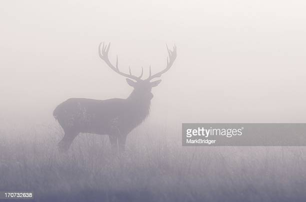 pastel - buck stock photos and pictures
