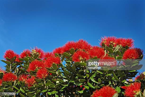 POHUTUKAWA FLOWERS LANDSCAPE