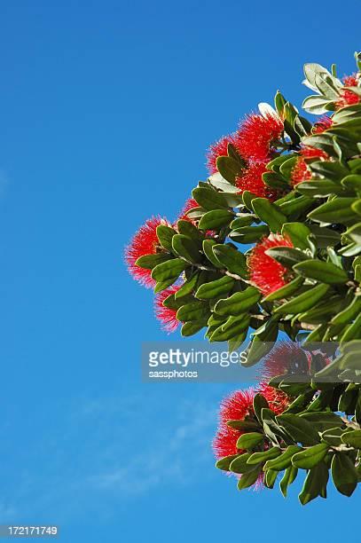 POHUTUKAWA FLOWERS & BLUE SKY
