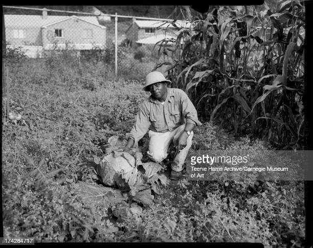 Thomas Hollis wearing pith helmet and squatting beside large prizewinning cabbage in garden with corn and other vegetables on estate of Jessie Vann...