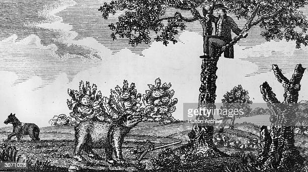 A member of Lewis and Clark's exploratory team hiding up a tree after having shot a bear Original Publication From 'Journal of Voyages' by Peter Gass...