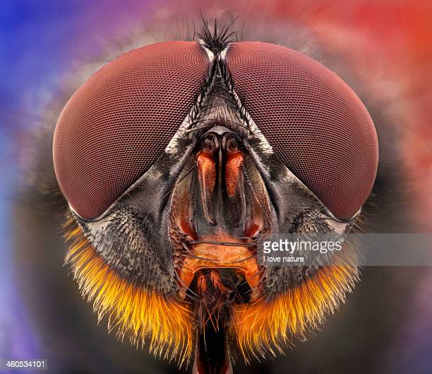 the red beard - fly portrait - bug eyes stock photos and pictures