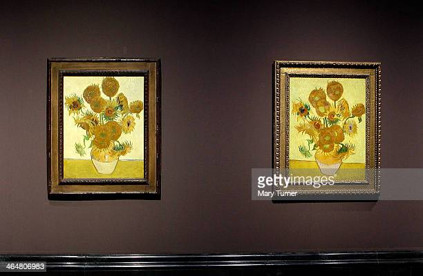 Two of Van Gogh's 'Sunflowers' hang side by side on display in a new exhibition at the National Gallery on January 24 2014 in London England The...