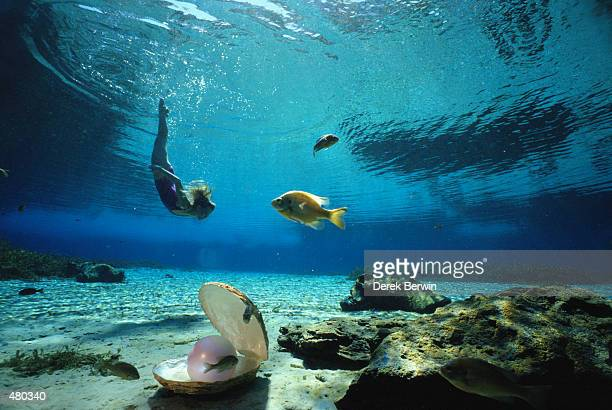woman swimming underwater with pearl - oyster pearl stock photos and pictures