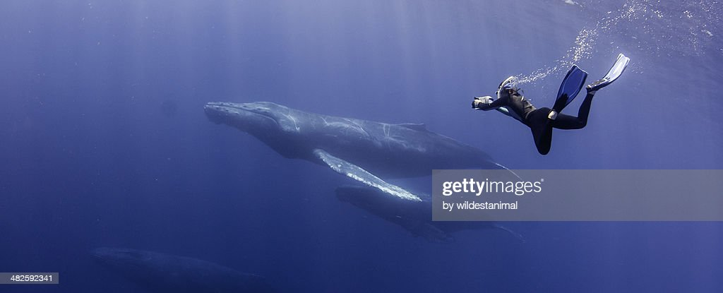 FREEDIVING : Stock Photo