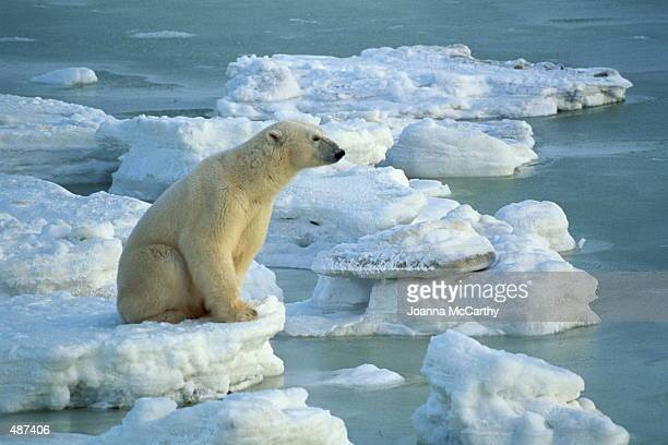 polar bear sitting on small iceberg - ijsschots stockfoto's en -beelden