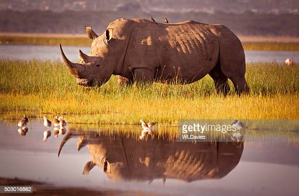 511369165 - kenya stock pictures, royalty-free photos & images