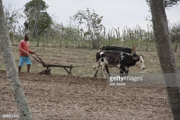 AGRICULTURA / ARADO / ANIMAL