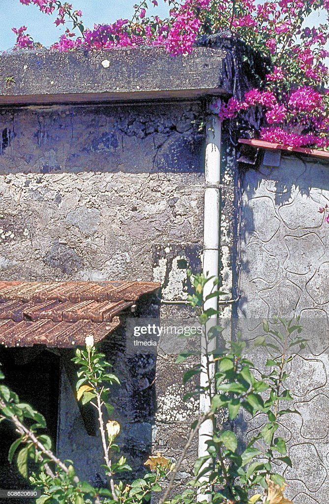TROPICAL FLOWERS ON ROOF OF ABANDONED DOMINICA HOUSE : Stock Photo