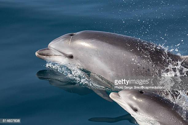 MOM AND BABY DOLPHINS