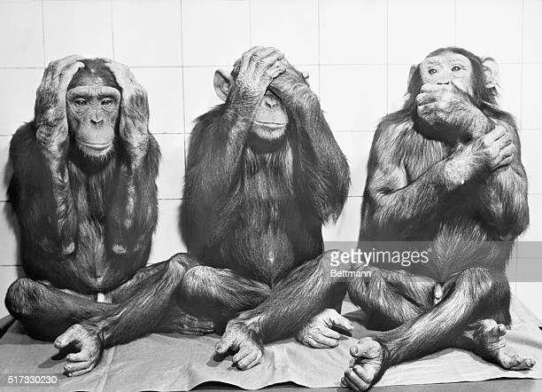 YOU'VE HEARD ABOUTAND HERE IT IS THE OFTEN SPOKEN ANCIENT INDIAN PROVERB 'HEAR NO EVIL SEE NO EVIL AND SPEAK NO EVIL' IS SHOWN HERE IN THE FLESH IT'S...