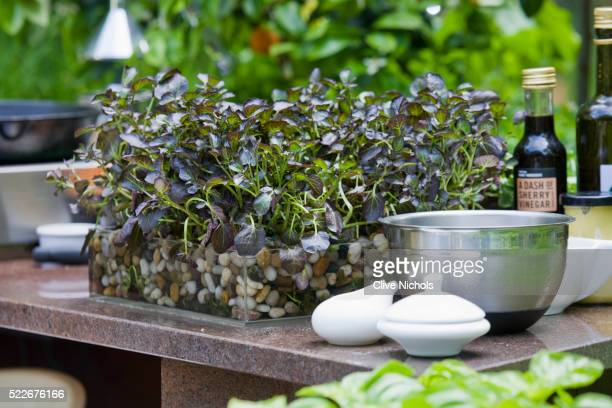 OUTDOOR KITCHEN WITH PURPLE WATERCRESS IN TRAY