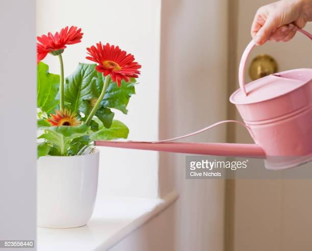 DESIGNER - CLARE MATTHEWS: HOUSEPLANT PROJECT - WATERING PLANT WITH WATERING CAN