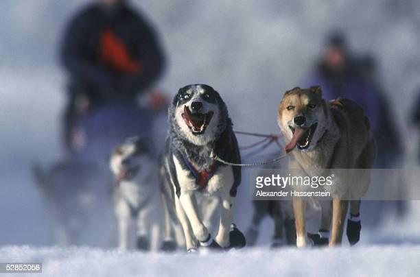 ALASKA 1999 Fairbanks Whitehorse 150299