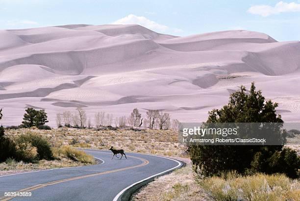 DESERT ROAD WINDING THROUGH GREAT SAND DUNES NATIONAL PARK COLORADO DEER CROSSING ROAD