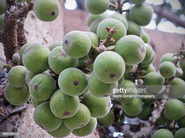 FIG (DRY FRUITS)