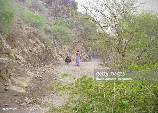mountain valley - pastora vega fotografías e imágenes de stock