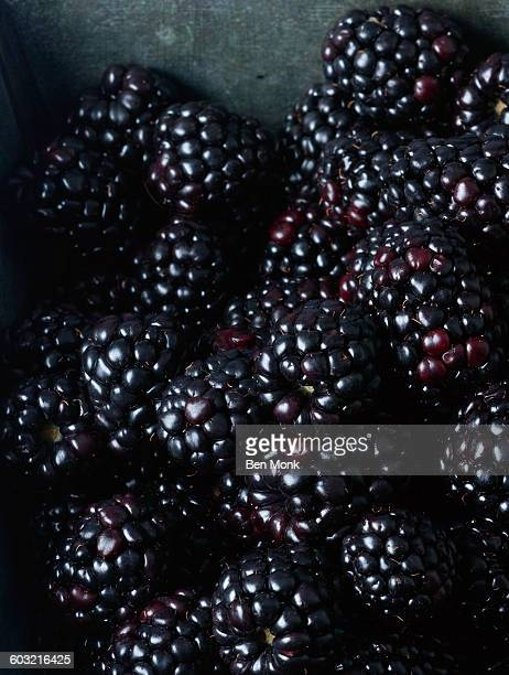 blackberries freshly picked - blackberry fruit stock pictures, royalty-free photos & images