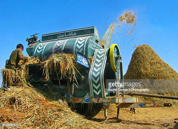 harvesting of rice crop - threshing stock photos and pictures