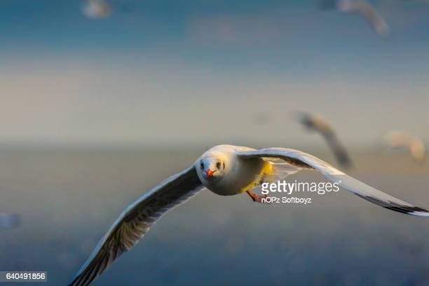 fly to the sky - nopz stock pictures, royalty-free photos & images