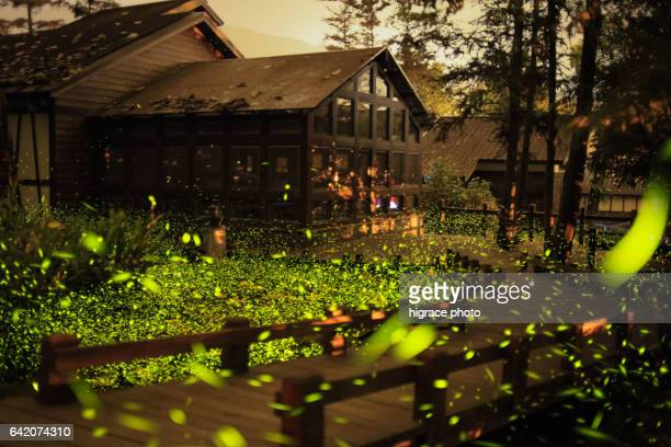 firefly light - glowworm stock pictures, royalty-free photos & images