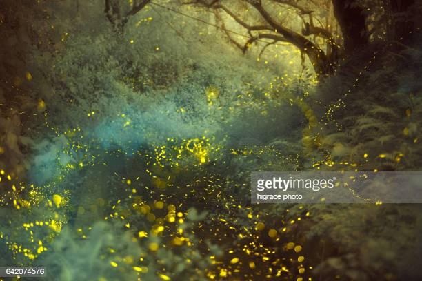 firefly light - グローワーム ストックフォトと画像