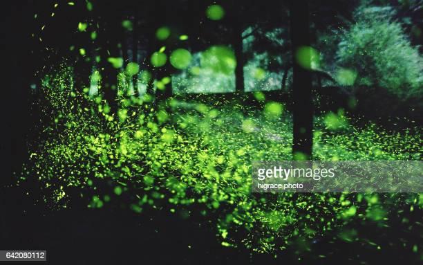 firefly light summer night - 蛍 ストックフォトと画像