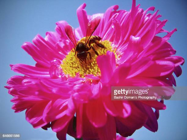 honey bee - queen bee stock pictures, royalty-free photos & images
