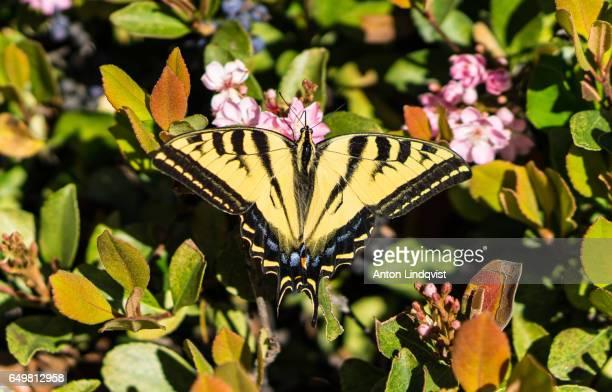 natur - natur photos et images de collection