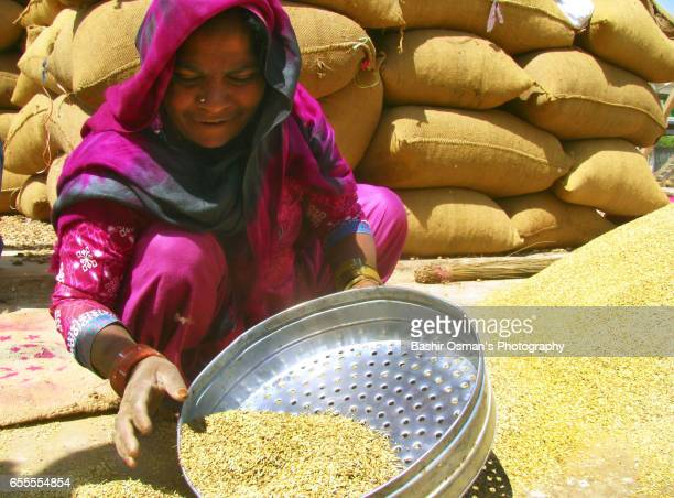 FENNEL SIEVING AT A MARKET PLACE
