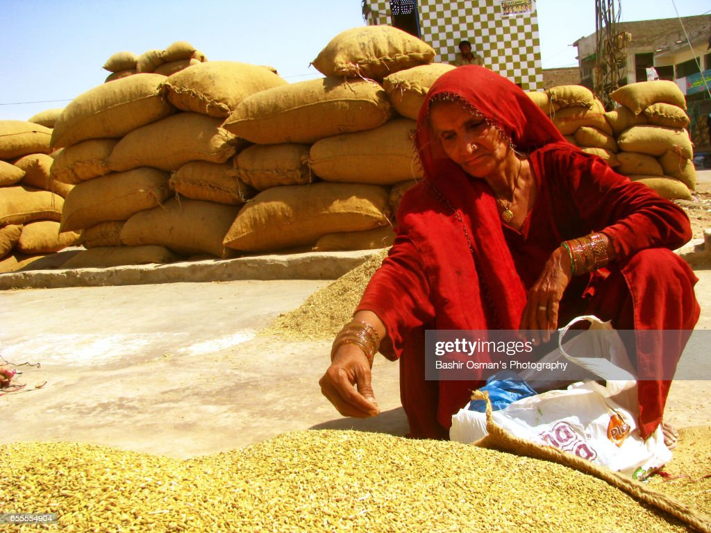 FENNEL SIEVING AT A MARKET PLACE : Stock-Foto